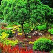 Экодизайн, как часть ландшафтного дизайна